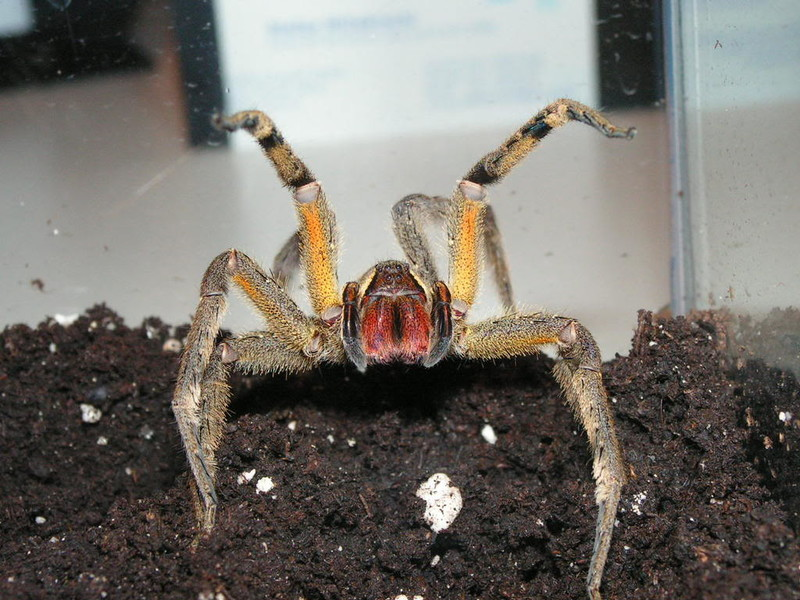 World's Most Deadly Spiders - Elite Facts