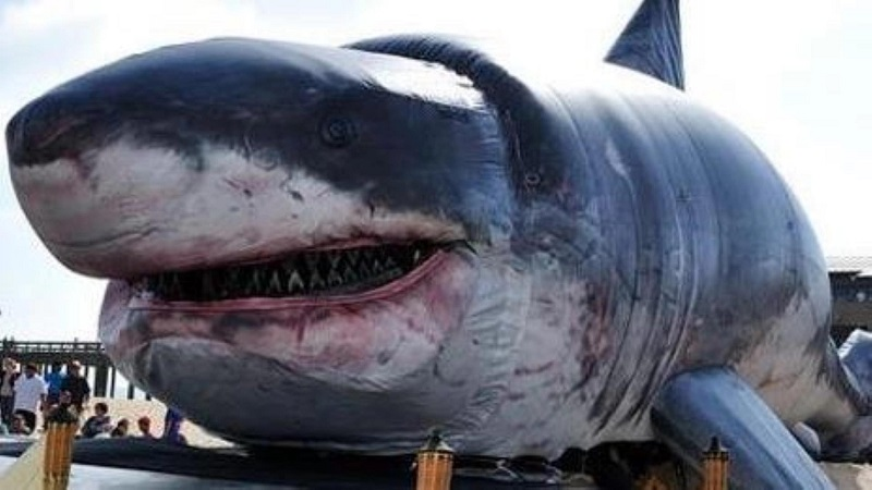 The Biggest Sharks Ever Caught Top 10